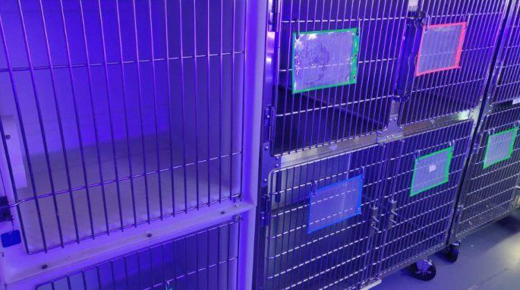 Cage Sanitizer
